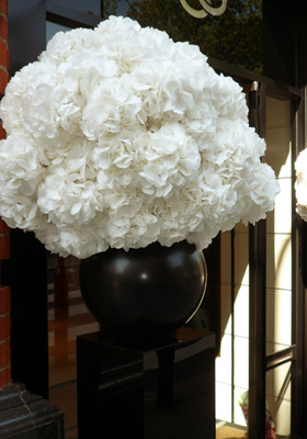 Jen Jakobsen Floral Construction Home page flowers: white hydrangea